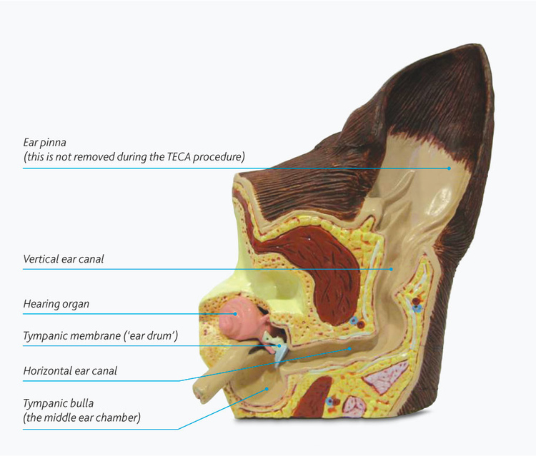 figure_1_normal_ear_canal_internal_anatomy_mb.jpg
