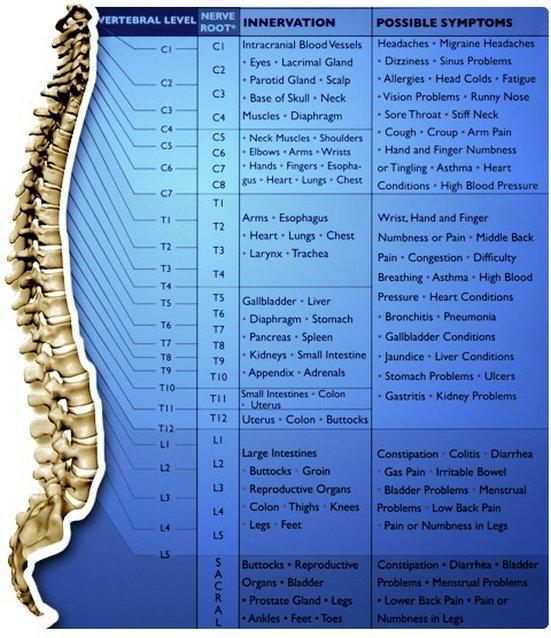 Livonia Chiropractor   Livonia chiropractic The Nerves of the Body    MI  