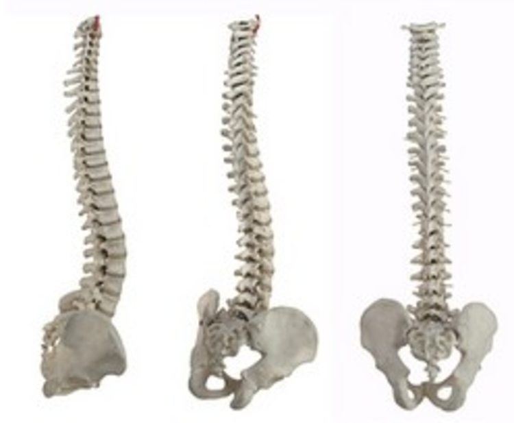 about_chiro.png