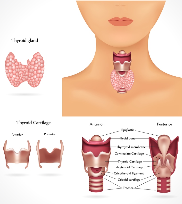 Thyroid Treatment Ocala Chirorpactor