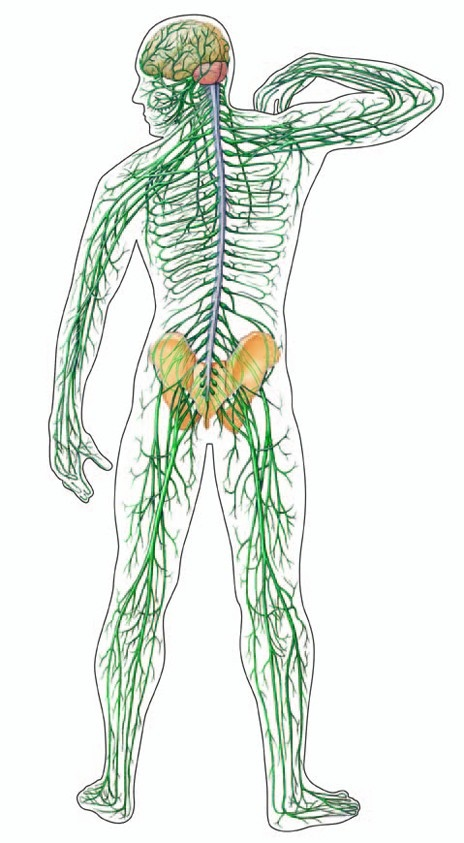 Des Plaines Chiropractor | Des Plaines chiropractic Are we Orthopedic Or Neurolgist Dr's? |  IL |