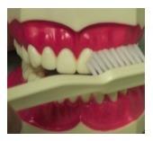 brushing1.jpg