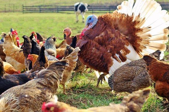 Rural Retreat My Shepherd's Farm | My Shepherd's Farm in Rural Retreat | VA | Michelle Bracken