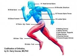 1024px_Codification_of_Orthotics__Draw_by_Dr.jpg
