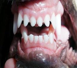 Tucson Veterinary | Tucson Orthodontics ( Mandibular Base Narrow Repair) | AZ | <p>Eastpoint Pet Clinic, P.C.</p> |