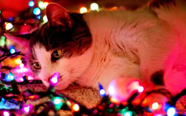 holidaycat.jpg