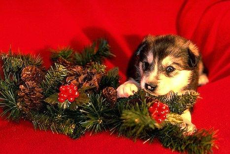 holidaydog.jpg