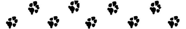 Moultonboro Veterinary | Moultonboro Pet Gallery | NH | <p>Meadow Pond Animal Hospital, LLC</p> |
