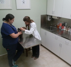 Dr. Lista and Erika in room 4