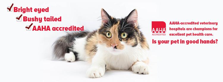Miami Veterinary   Miami We're Accredited!   FL   <p>Trail Animal Hospital</p>  