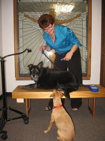 Denver Chiropractor | Denver chiropractic Dogs |  CO |