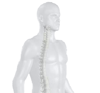 3Dspine.png