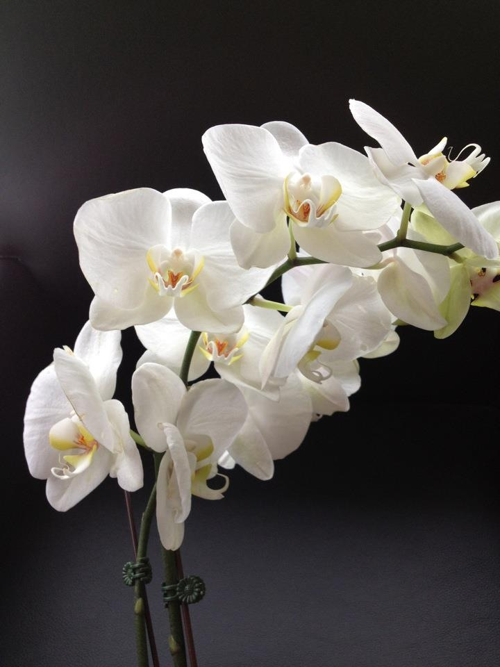 pretty_flowers.jpg