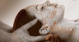 Rogers Chiropractor   Rogers chiropractic Cranial Sacral Technique    AR  