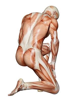photogallery_bones_muscles_01_full.jpg