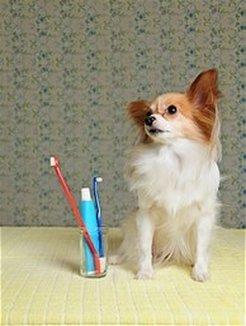 Dallas Veterinary | Dallas Dental Cleaning | NC | Crossroads Animal Hospital |