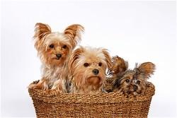 Dallas Veterinary | Dallas Our Services | NC | Crossroads Animal Hospital |