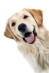 Dallas Veterinary | Dallas Vaccinations - Dogs | NC | Crossroads Animal Hospital |