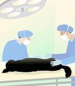 surgerydog.jpg