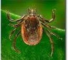 Dallas Veterinary | Dallas Flea and Tick Prevention | NC | Crossroads Animal Hospital |