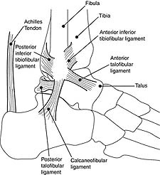 i_foot.jpg
