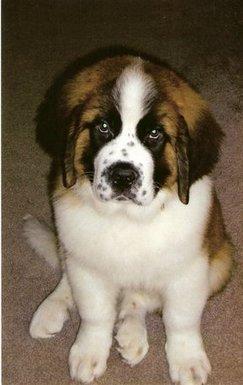 Hillsborough Veterinary | Hillsborough Routine Preventative Care | NC | HomeVet Mobile Veterinary Care |