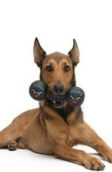 Hillsborough Veterinary | Hillsborough Physical Exam | NC | HomeVet Mobile Veterinary Care |