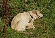 Hillsborough Veterinary   Hillsborough Flea and Tick Prevention   NC   HomeVet Mobile Veterinary Care  