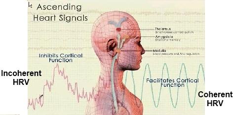 Natick Chiropractor | Natick chiropractic HeartMath |  MA |