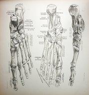 Des Moines Podiatrist | Des Moines Conditions | IA | Advanced Foot & Ankle Clinic |