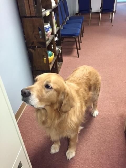 Charleston Chiropractor | Charleston chiropractic Meet The Staff |  SC |