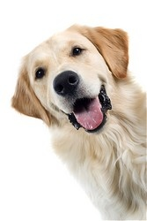 Huntington Beach Veterinary | Huntington Beach Vaccinations - Dogs | CA | Adams Pet Clinic |