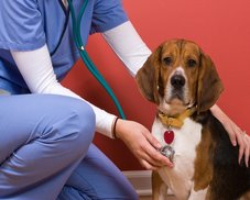 Huntington Beach Veterinary | Huntington Beach Our Services | CA | Adams Pet Clinic |